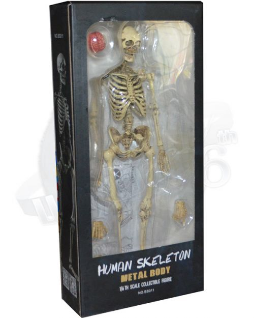 COO Model The Human Skeleton (Diecast Alloy)